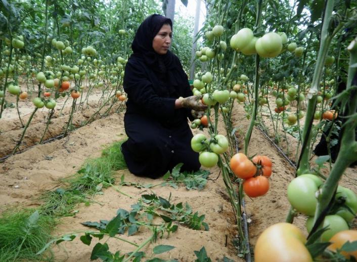 La solidaridad del FAMSI con Palestina: ejes de acción